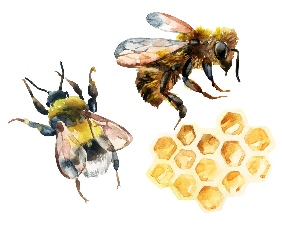 world bee day: bees