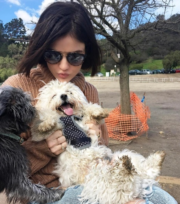 Lucy Hale with a short hair cut wearing sunglasses and playing with two dogs