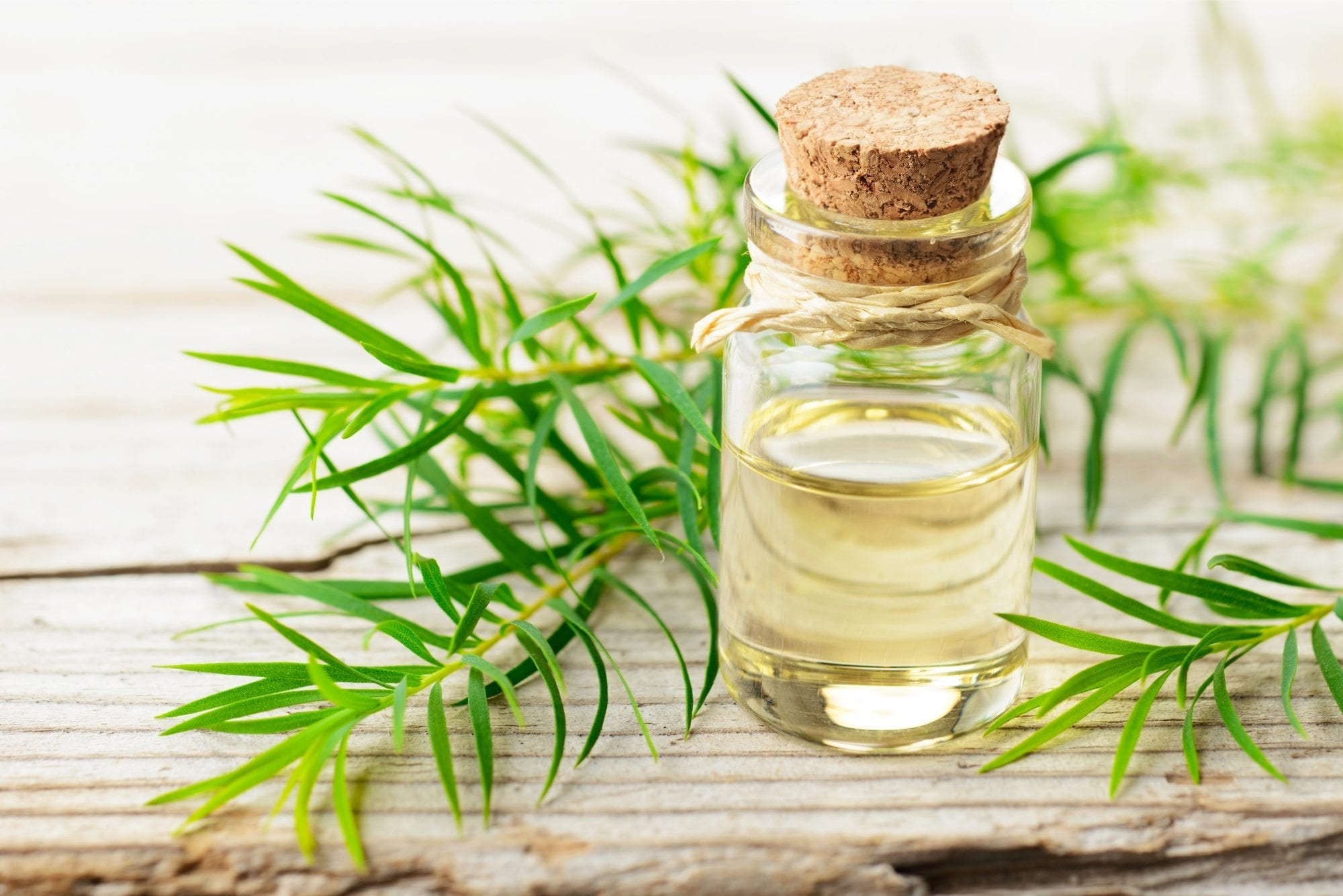 Natural dandruff remedies: a bottle of tea tree oil with a fig of tea tree on a plank of wood